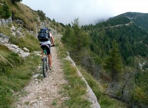 Robsl auf Fahrweg zum Monte Maggio